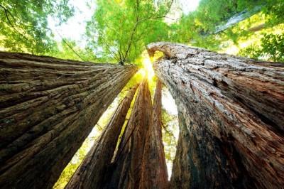 byl sobie las forets-extraordinaires-monde-L-_QCNNm