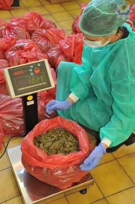 kwpgdansk-marihuana18kg (4)